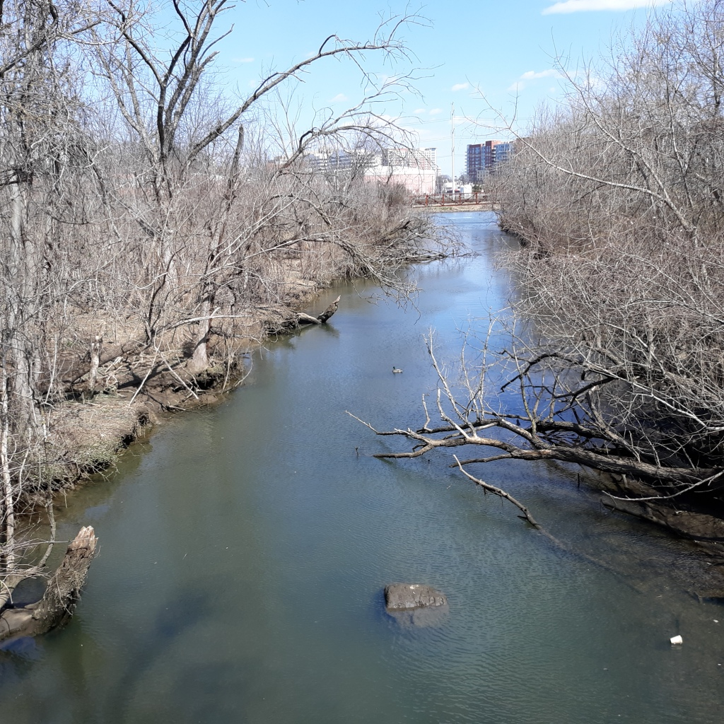 Four Mile Run, a stream that feeds into the Potomac Rive.  It's surrounded by still barren trees.